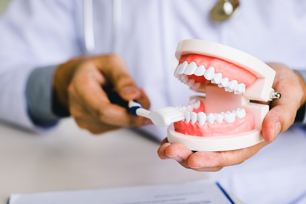 Types Of Teeth: Incisors, Canines, Premolars And Molars